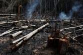 Amazonie: Des centaines de nouveaux feux, vive émotion planétaire