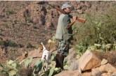 Enquête sur la chasse illégale dans la région de Marrakech-Safi: la société organisatrice sera poursuivie en justice