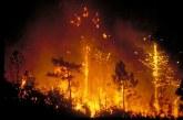 Chefchaouen: 65 hectares de la forêt de Achacha-Tassift ravagés par le feu