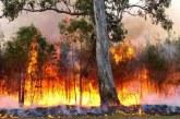 Feu de forêt à Chefchaouen: quelque 470 hectares ravagés