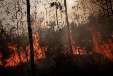 La Belgique soutient la lutte contre les feux de forêt en Amazonie