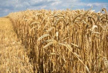 Baisse du droit d'importation du blé tendre: un projet de décret adopté