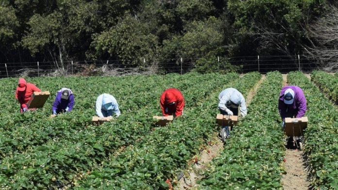 ouvrières agricoles