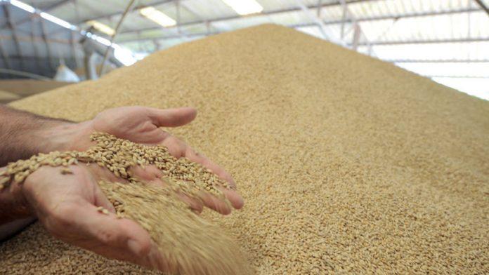 importations des céréale