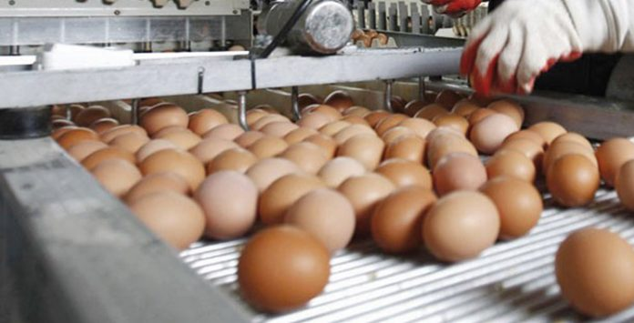 secteur d'œufs
